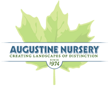 Augustine Nursery sponsors Fall for Art
